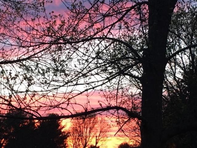 Nature - Evening Sky   - Photos taken with iPhone 6S Plus